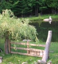 Resident's pond
